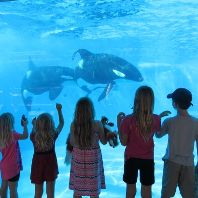 shamu beautiful