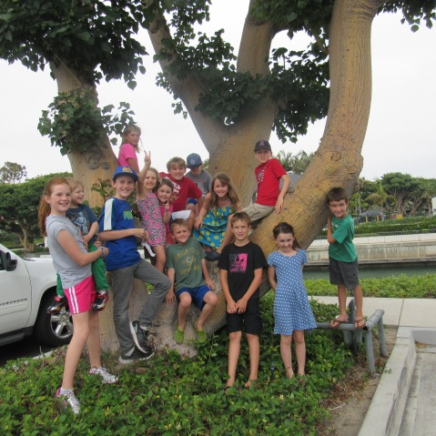 tree group shot