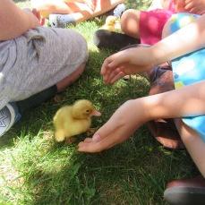 duck-standing